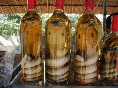 Лекарство made in змея- Фото 1